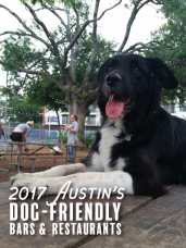 2017 Austin_s Dog-Friendly Bars & Restaurants
